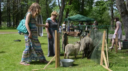 sheepfold : KAIRENAI, LITHUANIA - MAY 24, 2014: Citizen women admire farm animal sheep and goat in agricultural exhibition on May 24, 2014 in Kairenai, Lithuania.