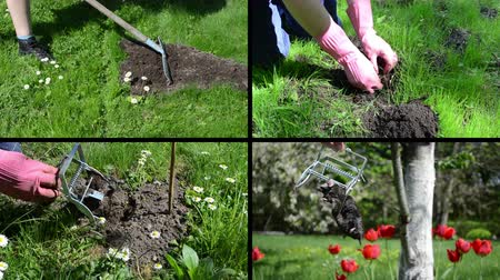 molehill : Fighting mole rodent in garden. Leveling mole hill with rake tool. Hand hold dead animal. Montage of video footage clips collage. Split screen. Black angular frame. 4K UHDTV 2160p Stock Footage
