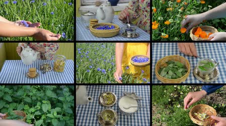herbal medicine : Hands gather herb flowers plants and make herbal tea. Alternative medicine. Montage of video clips collage. Split screen. Black angular frame. 4K UHDTV 2160p Stock Footage