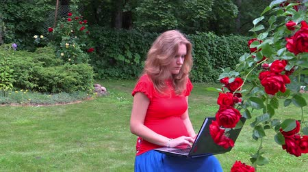 krzak : Pregnant woman sit near rose flower bush and work with laptop computer in outdoor garden. Left side sliding shot. Full HD 1080p. Progressive scan 25fps. Dolly camera movement.