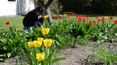 quintal : woman girl care beautiful spring tulip flowers in backyard. Recreation in garden.