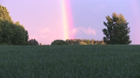 dark sky : Agriculture field plants and rainbow in sky between trees.  Stock Footage