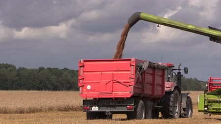 cultivo : Agriculture machine load harvested grain into truck trailer. Vídeos