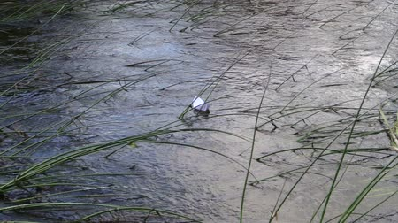 fantasia : flow stream tide away small white paper boat over bulrush in nature. Vídeos