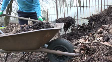 el arabası : close up of gardener farmer load compost pile with fork into rural old wheelbarrow. Work in farm. Static tripod shot. 4K UHD video clip.