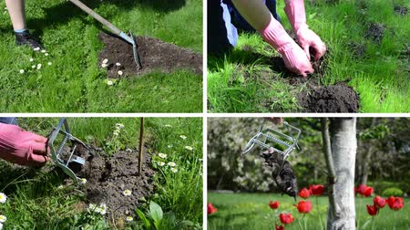 molehill : Fighting mole rodent in garden. Leveling mole hill with rake tool. Hand hold dead animal. Montage of video footage clips collage. Split screen. White angular frame. 4K UHD 2160p Stock Footage