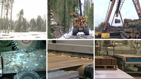 паркет : Timber and lumber industry. Tree cut and transport in forest. Floor parquet wood board production in factory. Montage of video clips collage. Split screen. White angular frame. Full HD 1080p. Стоковые видеозаписи
