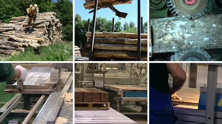 пиломатериалы : Timber and lumber industry. Tree log transportation. Floor parquet wood board production in factory. Montage of video clips collage. Split screen. White angular frame. Full HD 1080p.