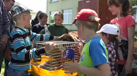 ear protection : SIRVINTOS, LITHUANIA - MAY 29, 2015: Citizen kids enjoy rural rabbits animals in cages exhibition on May 29, 2015 in Sirvintos, Lithuania. Static shot. 4K
