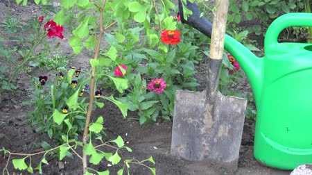 konewka : Small tree sapling, spade tool and watering can in garden. Tilt up closeup shot. 4K
