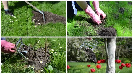 molehill : Fighting mole rodent with trap in garden. Clips collage.