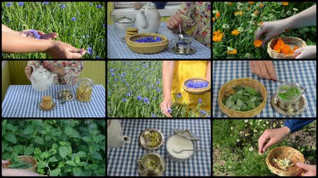 herbal : Hands gather herbs and make herbal tea. Clips collage