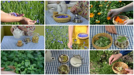 herbal : Hand gather herb and make herbal tea. Clips collage