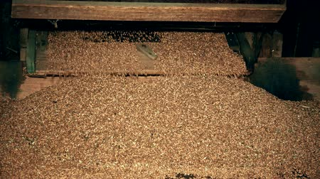 sifted : Sifted grain falling from old wooden sifting machine. Closeup Stock Footage