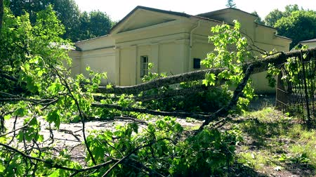 повреждение : Fallen tree after a severe storm in a residential neighborhood