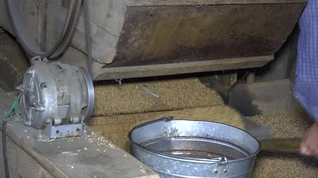 Machine sifting grain and worker hands draw oat and pour into steel bucket Wideo