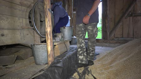 sifting : Men carry buckets with grain. Agriculture grain sifting machine