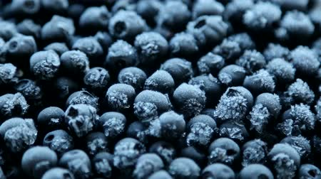 congelado : frozen blueberries with frost