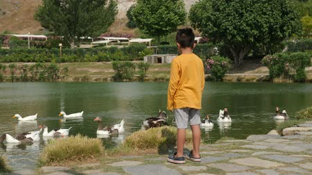 kaczka : Turkey, Pamukkale - 12 June 2019: boy child in a yellow t-shirt and shorts stands and looks at the floating geese in the lake June 12, 2019