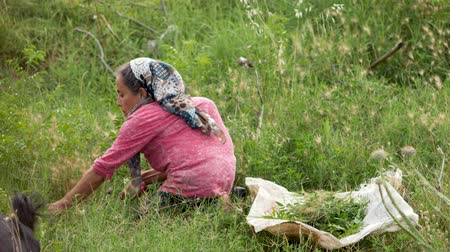 Turkey, Pamukkale - 12 June 2019: old woman in a scarf and a hump sitting on the ground and a sickle cuts the grass to feed the animals June 12, 2019