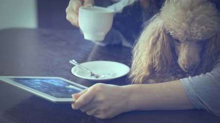 coffe : Young women is resting with a dog at home and using tablet.