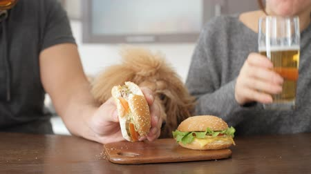 sandviç : Couple eating fast food. Man and woman eat hamburger. Dog looking at hamburgers. Stok Video