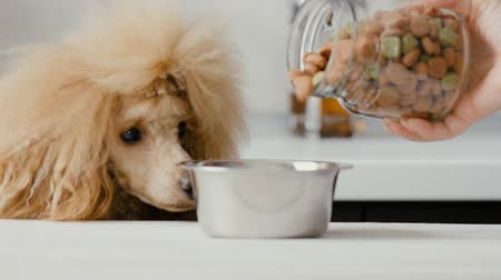 feed on : Pet food falls into the bowl for feeding. Dog looking on bowl. Stock Footage
