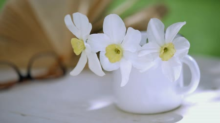żonkile : Cinemagraph - Book and narcissus in a mug on the wooden table. Motion Photo.