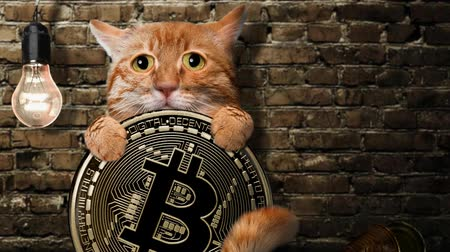 barbone : Cinemagraph - Gatto affamato con una moneta bitcoin. Animazione.