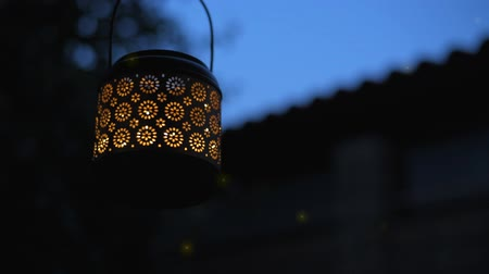 fireflies : Cinemagraph - Lantern with magical lights of fireflies at night. Concept of romance. Motion Photo.
