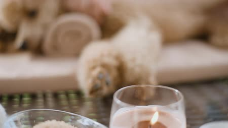 aromaterapia : Woman giving body massage to a dog. Spa still life with aromatic candles, flowers and towel.