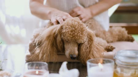bal : Woman giving body massage to a dog. Spa still life with aromatic candles, flowers and towel.