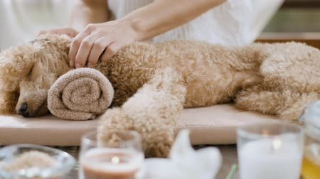 símbolo : Woman giving body massage to a dog. Spa still life with aromatic candles, flowers and towel.