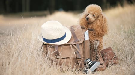Backpack with dog. Concept of travel. Background of nature. Close-up.