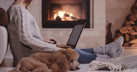 Freelancer woman and her dog sits at the floor with a laptop. Wideo