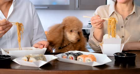 лапша : Cinemagraph- Couple with their dog enjoy japanese thai meal.