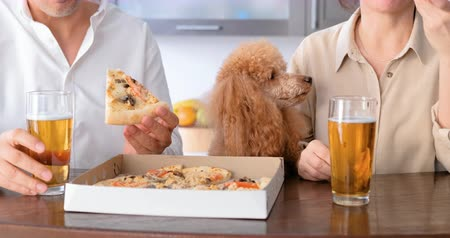 cogumelos : Couple with their dog eating pizza.