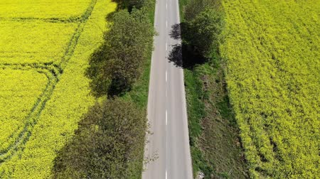 Aerial view of beautiful road in a yellow field with rapeseed (canola) Dostupné videozáznamy