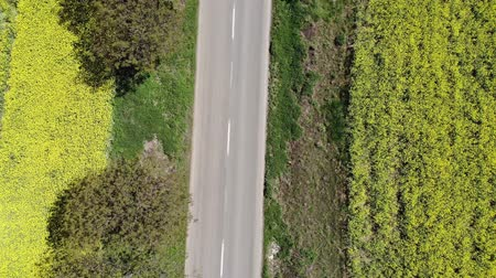canola : Aerial view of road between rape fields, drone flying across the road