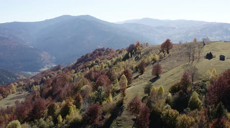 palheiro : Flying above beautiful colored autumn trees and stacked hay on the hill. Vídeos
