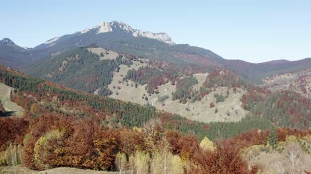 Aerial view of autumn trees landscape with rocky Ceahlau massif behind.