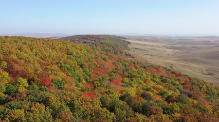 Flying drone above autumn forest, beautiful tree colors of october. Dostupné videozáznamy