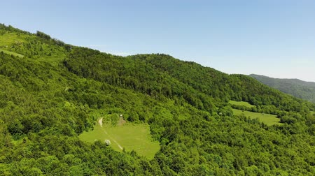 Drone above green forest against the blue sky. Aerial view of spring forest tree
