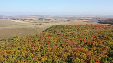 Aerial view of idyllic golden forest, rural landscape Dostupné videozáznamy