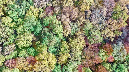 Foliage tree forest in autumn, drone view from above. Dostupné videozáznamy
