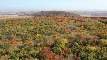 Top view of foliage tree forest during vibrant colors of autumn. Dostupné videozáznamy