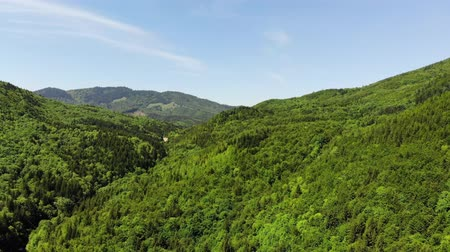 rural area : Fresh green forest and the blue sky, view from above Stock Footage