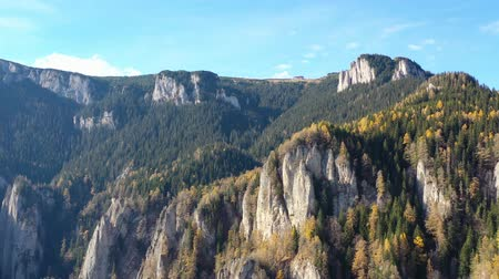 Autumn coniferous forest scenery: larch trees and evergreen forest in a rocky mountain