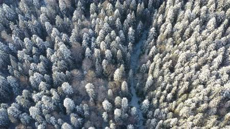 Above view of frozen trees in winter forest