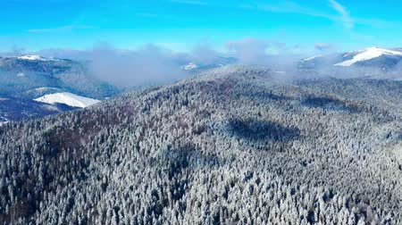 Aerial view of forest in winter: Frozen trees and snow covered evergreen forest. Some low clouds in time lapse mode